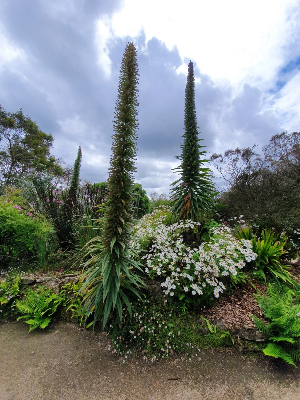 (29) Jardin exotique de Roscoff 20200655