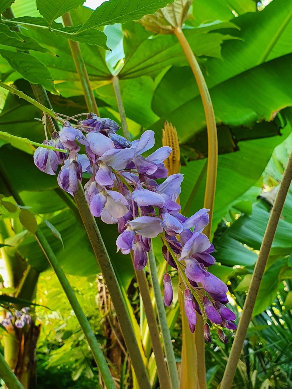 Rémi - Mon (tout) petit jardin en mode tropical - Page 18 20200676