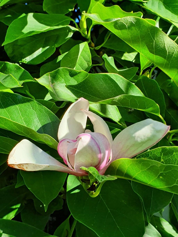 Rémi - Mon (tout) petit jardin en mode tropical - Page 18 20200677