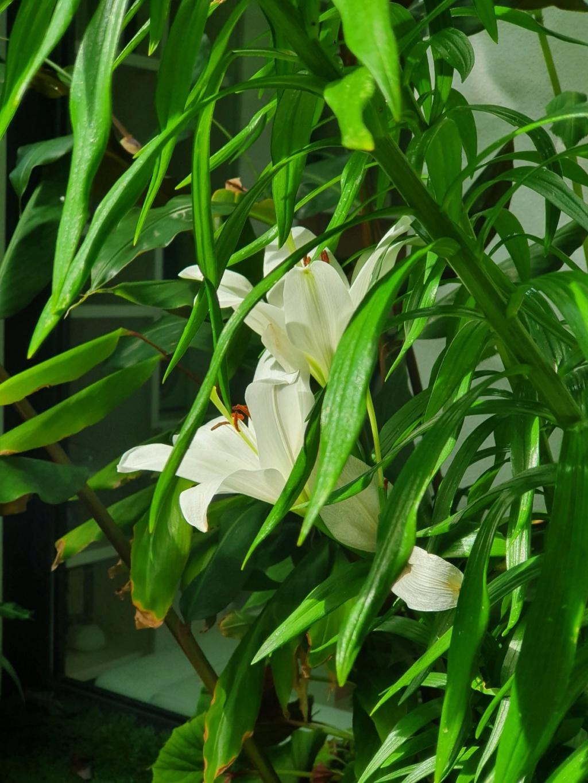 Rémi - Mon (tout) petit jardin en mode tropical - Page 18 20200684