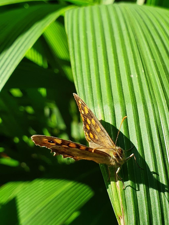 """Déficoncours """"Les insectes sur les plantes"""" - les participations 20200685"""