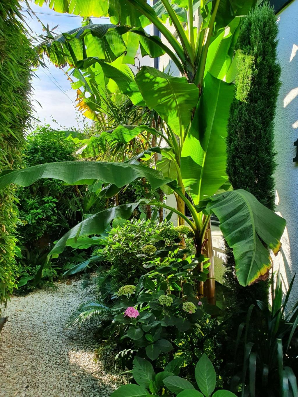 Rémi - Mon (tout) petit jardin en mode tropical - Page 18 20200760