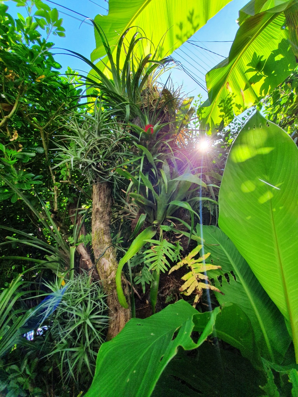 Rémi - Mon (tout) petit jardin en mode tropical - Page 18 20200771