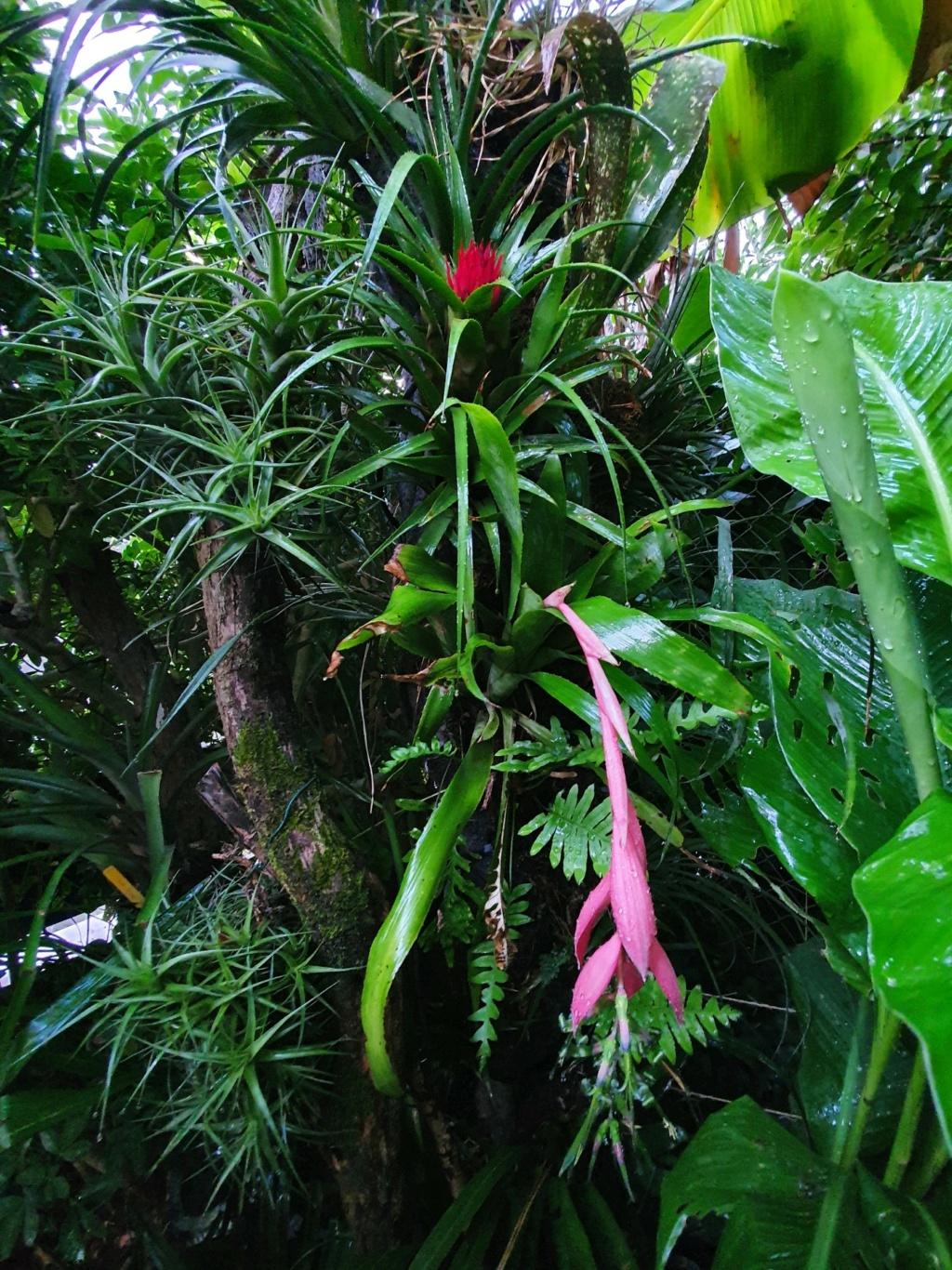 Support à épiphytes et broméliacées rustiques - Page 6 20200830