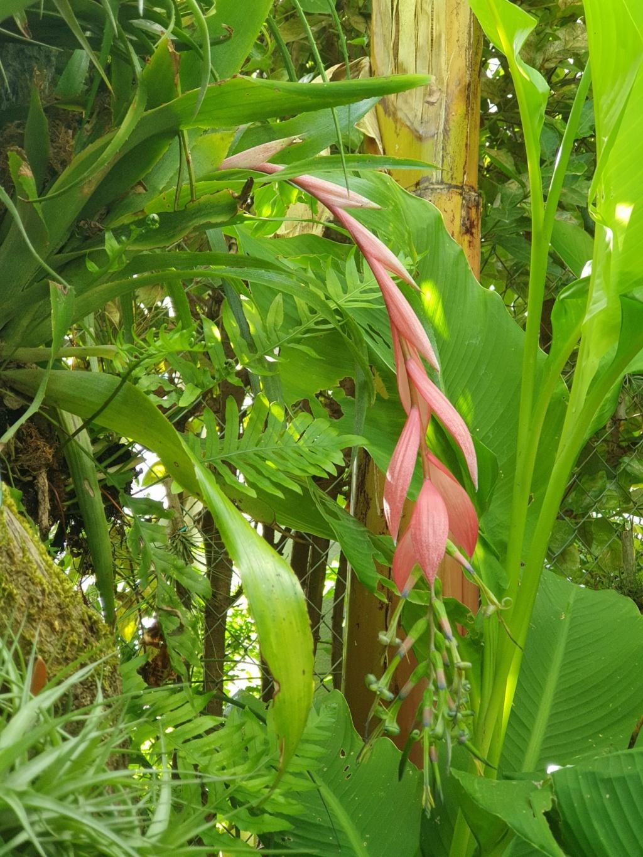 Support à épiphytes et broméliacées rustiques - Page 6 20200831