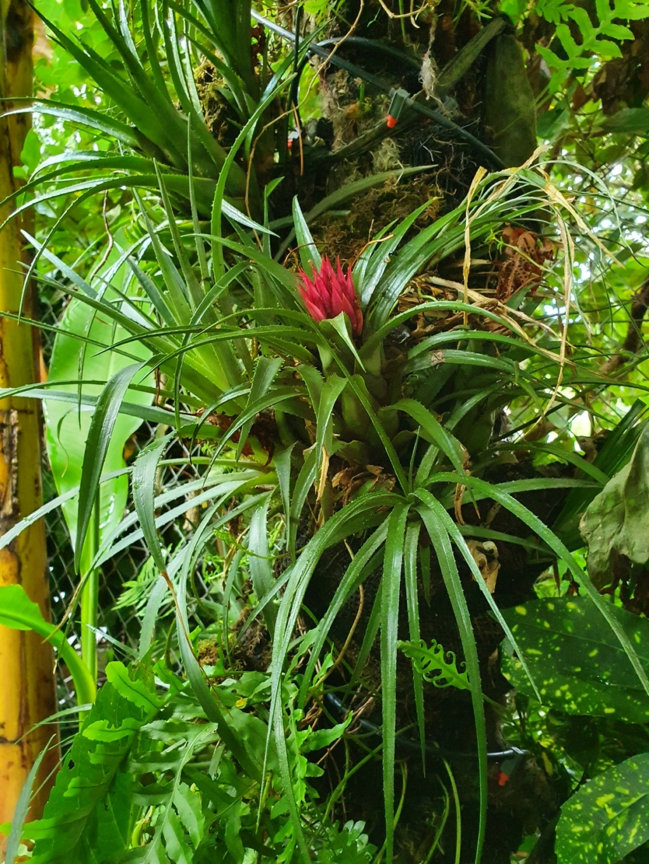 Support à épiphytes et broméliacées rustiques - Page 6 20200832