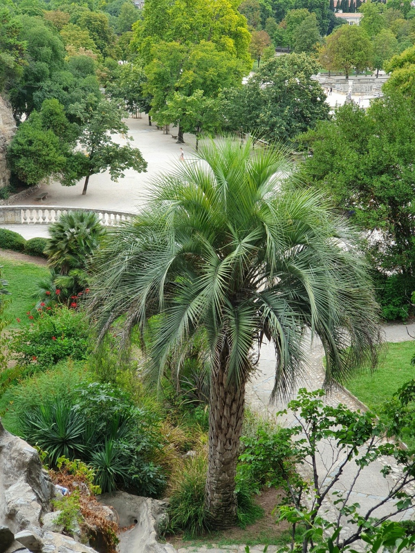 Jardins de la Fontaine  - Nîmes  (30) 20200893