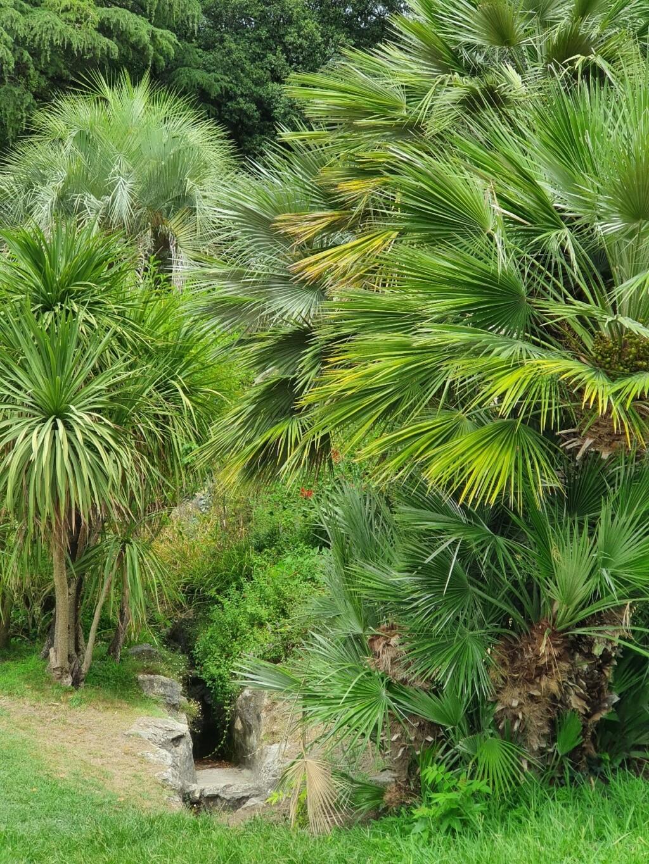 Jardins de la Fontaine  - Nîmes  (30) 20200895