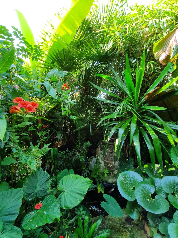 Rémi - Mon (tout) petit jardin en mode tropical - Page 18 20200946