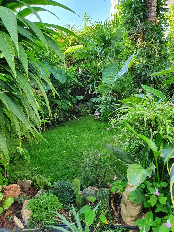 Rémi - Mon (tout) petit jardin en mode tropical - Page 18 20200948