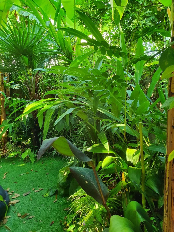 Rémi - Mon (tout) petit jardin en mode tropical - Page 18 20200950