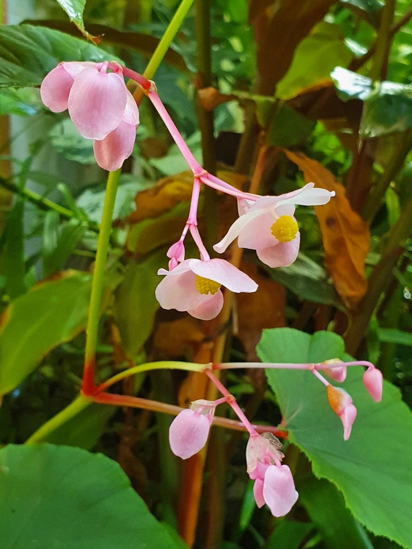 Rémi - Mon (tout) petit jardin en mode tropical - Page 18 20200953