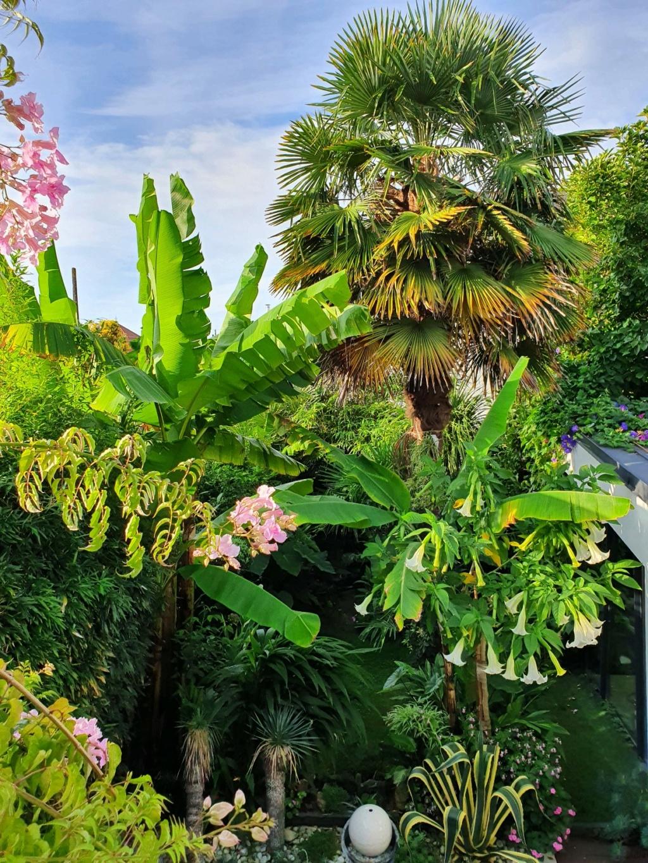 Rémi - Mon (tout) petit jardin en mode tropical - Page 18 20200984