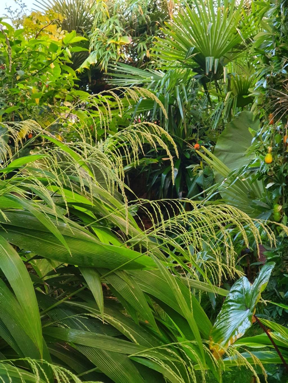 Rémi - Mon (tout) petit jardin en mode tropical - Page 19 20201050