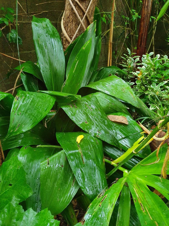 Rémi - Mon (tout) petit jardin en mode tropical - Page 19 20201124