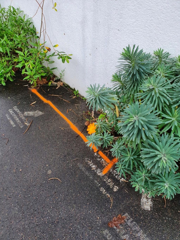 Végétaliser un trottoir - Page 28 20201126