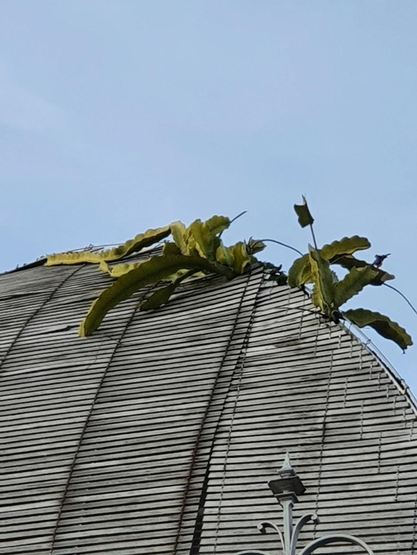 (44) Jardin des plantes - Nantes - Page 6 20210101