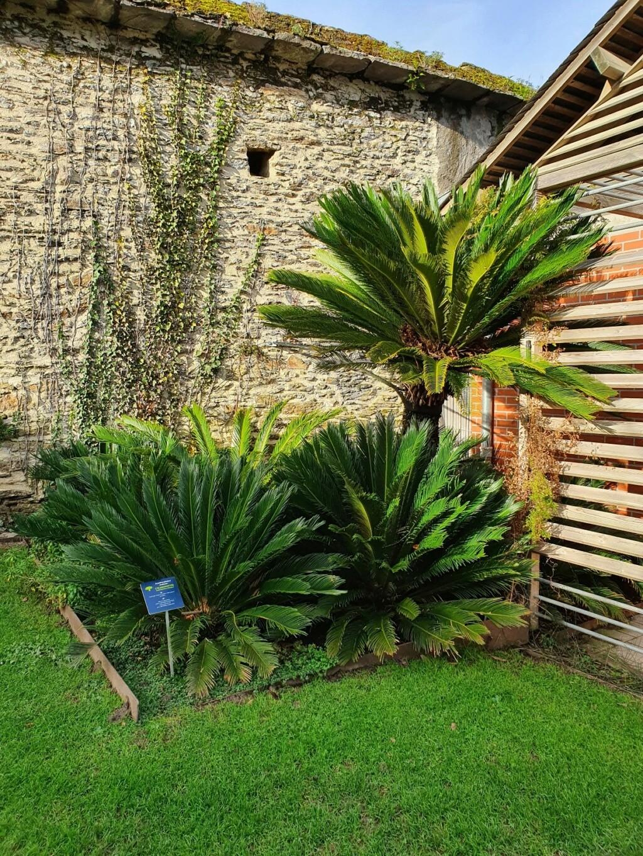 (44) Jardin des plantes - Nantes - Page 6 20210196