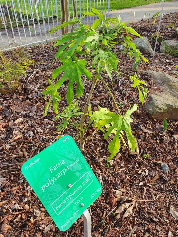 (44) Jardin des plantes - Nantes - Page 6 20210197