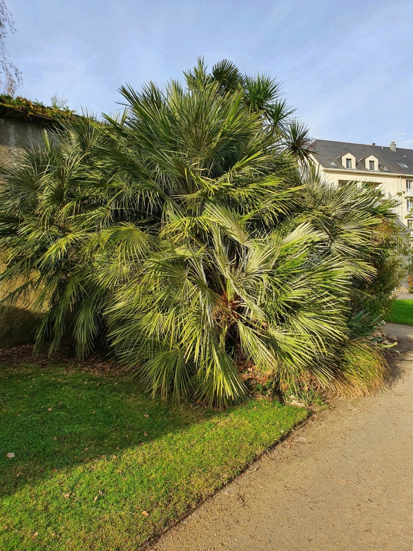 (44) Jardin des plantes - Nantes - Page 6 20210199