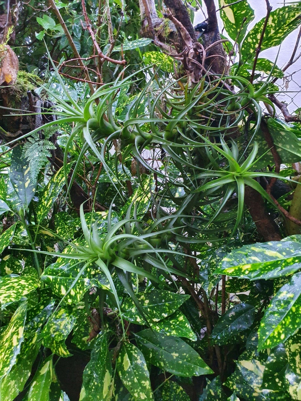 Rémi - Mon (tout) petit jardin en mode tropical - Page 19 20210208
