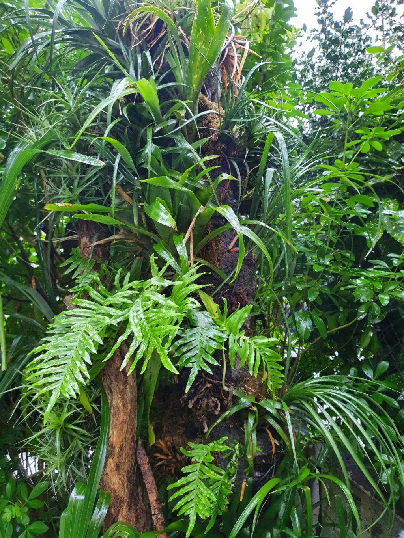 Rémi - Mon (tout) petit jardin en mode tropical - Page 19 20210209