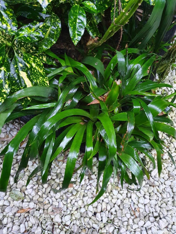 Rémi - Mon (tout) petit jardin en mode tropical - Page 19 20210213