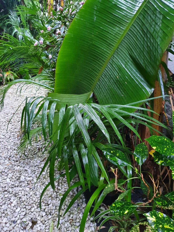 Rémi - Mon (tout) petit jardin en mode tropical - Page 19 20210214