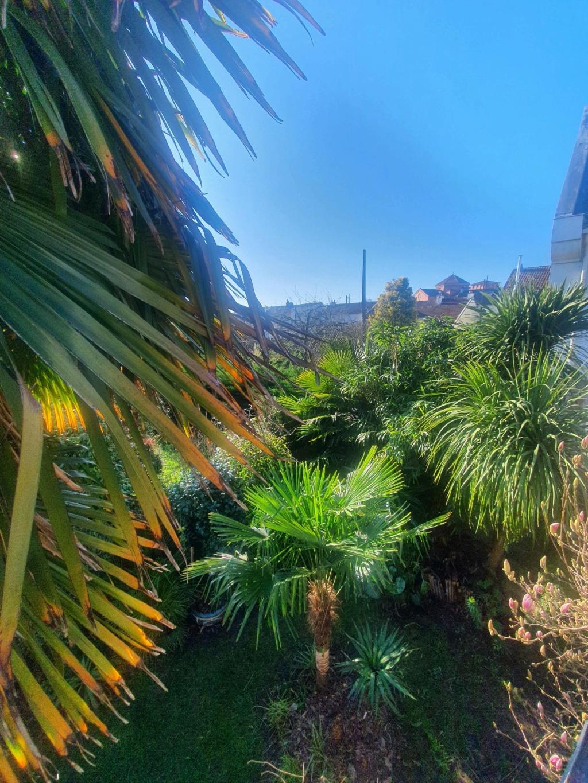 Rémi - Mon (tout) petit jardin en mode tropical - Page 19 20210272