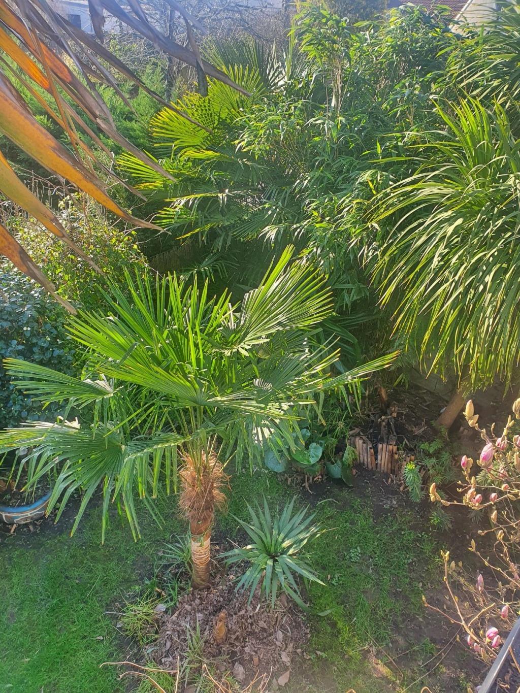 Rémi - Mon (tout) petit jardin en mode tropical - Page 19 20210273