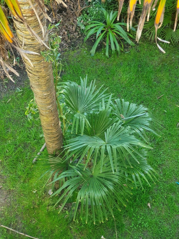 Rémi - Mon (tout) petit jardin en mode tropical - Page 19 20210274
