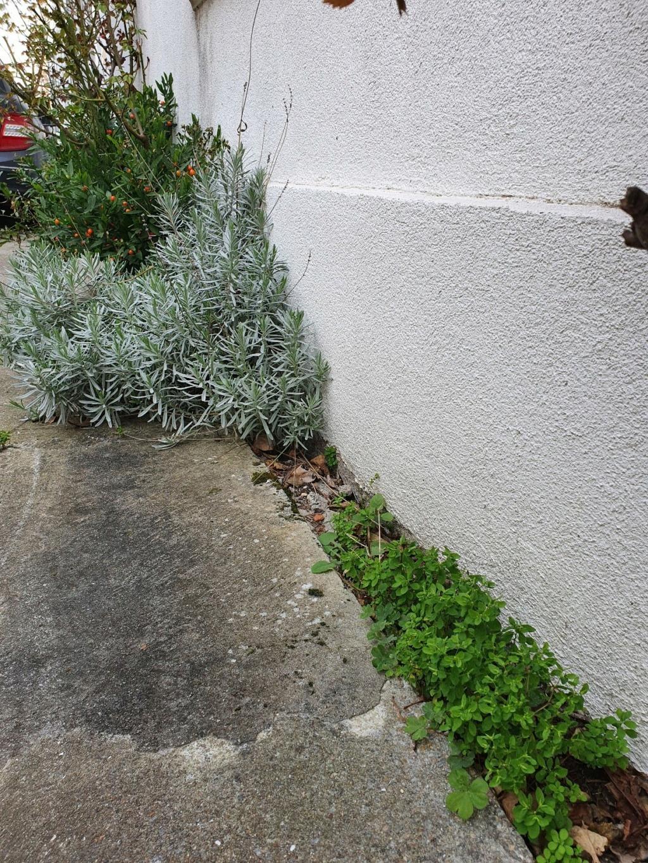 Végétaliser un trottoir - Page 28 20210320