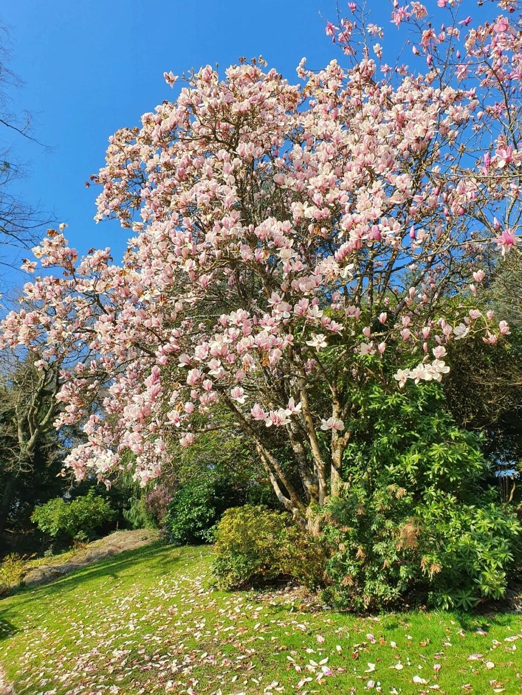 (44) Parc Floral de la Beaujoire - Nantes 20210334
