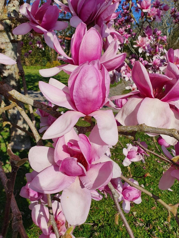 (44) Parc Floral de la Beaujoire - Nantes 20210336