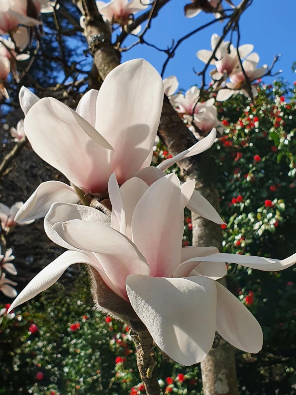 (44) Parc Floral de la Beaujoire - Nantes 20210341