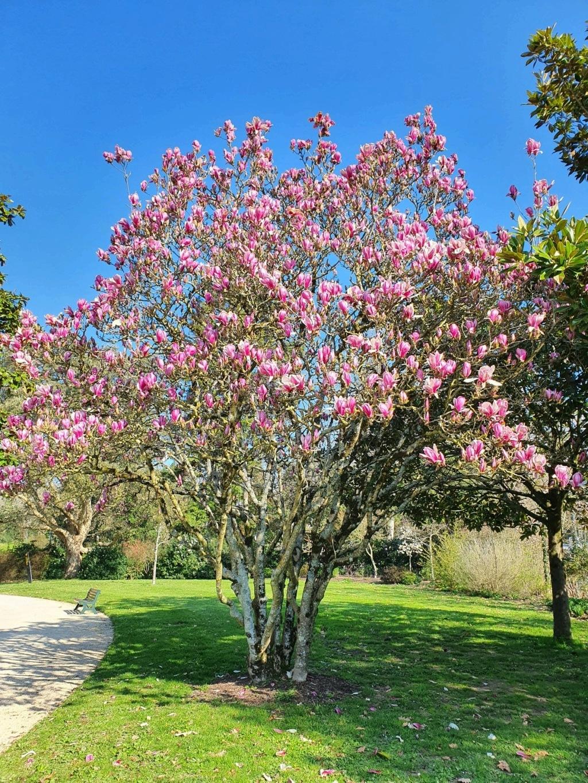 (44) Parc Floral de la Beaujoire - Nantes 20210344
