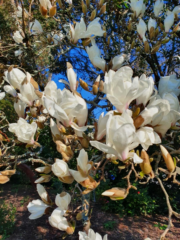 (44) Parc Floral de la Beaujoire - Nantes 20210345