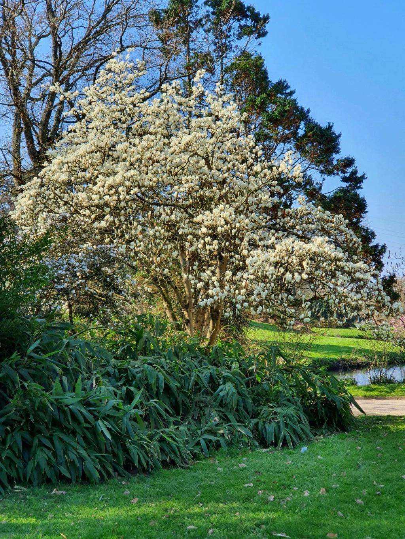 (44) Parc Floral de la Beaujoire - Nantes 20210346