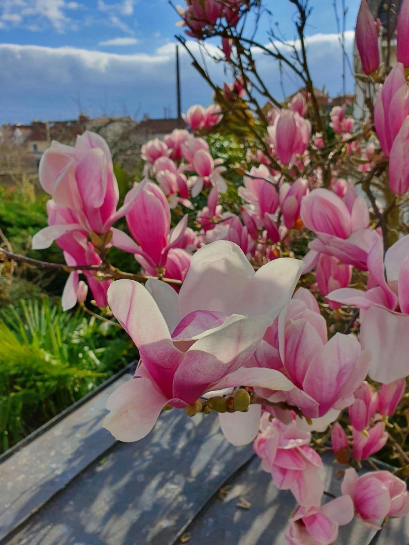 Rémi - Mon (tout) petit jardin en mode tropical - Page 20 20210348