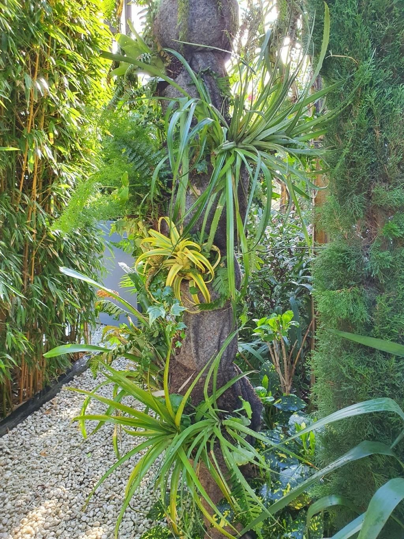 Support à épiphytes et broméliacées rustiques - Page 8 20210367