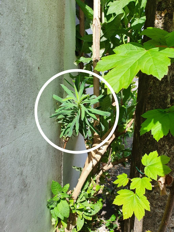 Rémi - Mon (tout) petit jardin en mode tropical - Page 20 20210374