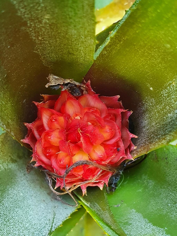 Support à épiphytes et broméliacées rustiques - Page 8 20210442