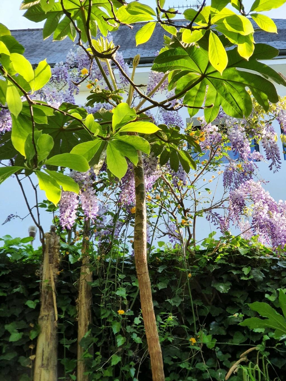Rémi - Mon (tout) petit jardin en mode tropical - Page 20 20210444