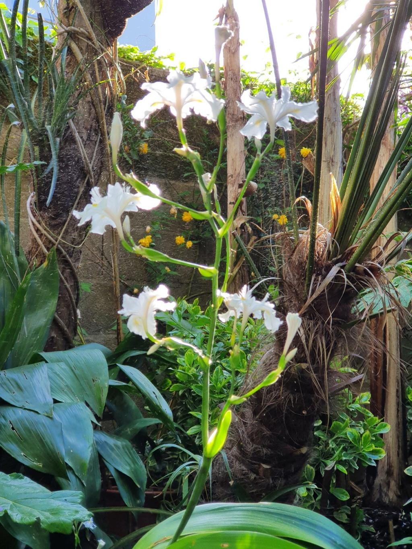 Rémi - Mon (tout) petit jardin en mode tropical - Page 20 20210445