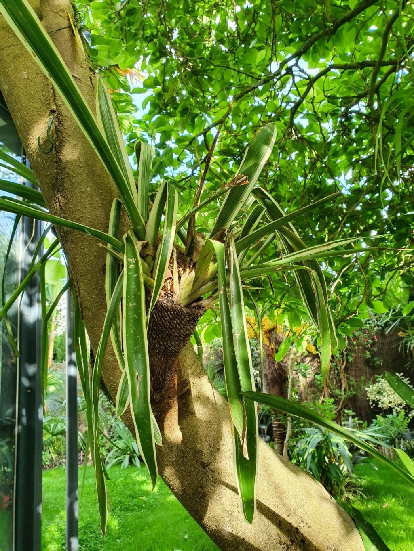 Support à épiphytes et broméliacées rustiques - Page 8 20210489