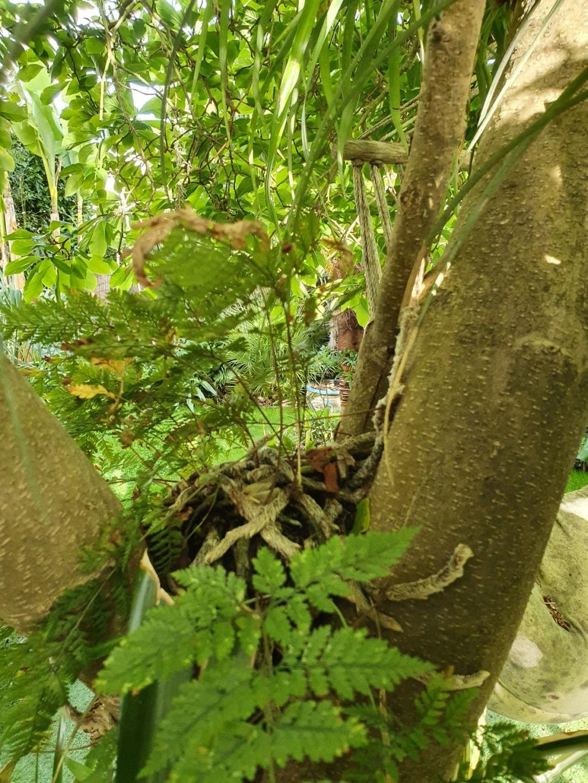 Support à épiphytes et broméliacées rustiques - Page 8 20210490