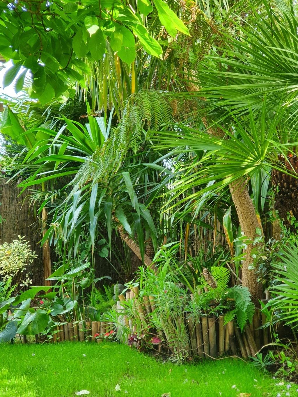 Rémi - Mon (tout) petit jardin en mode tropical - Page 20 20210491