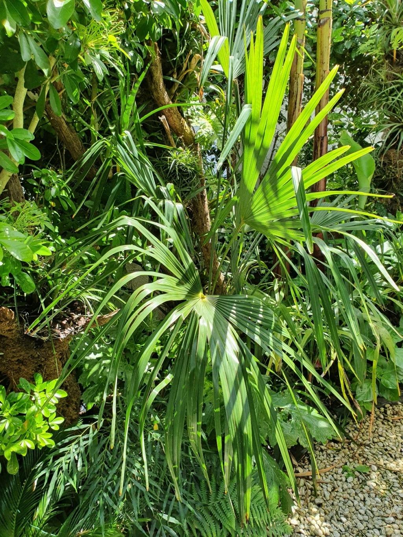 Rémi - Mon (tout) petit jardin en mode tropical - Page 20 20210501