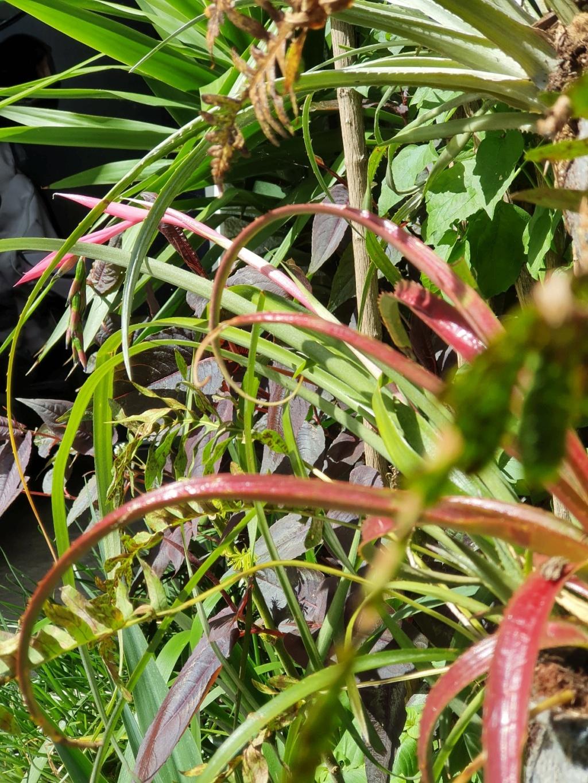 Support à épiphytes et broméliacées rustiques - Page 8 20210505