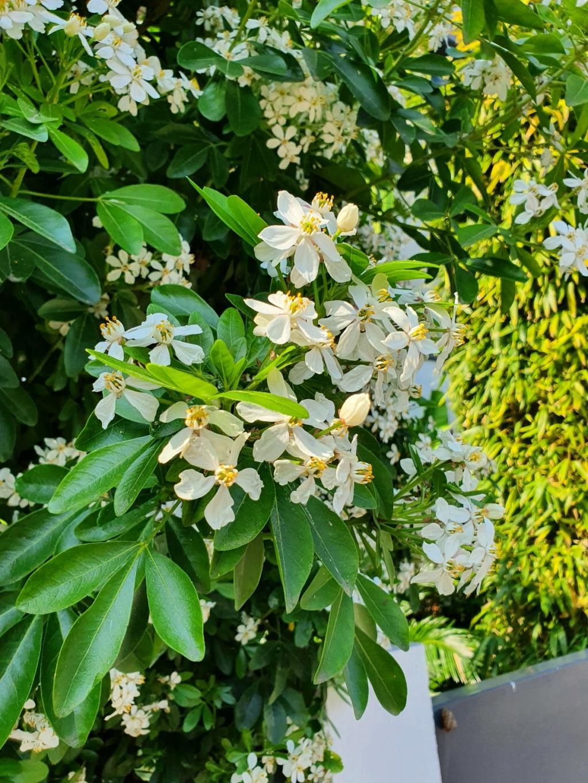 Rémi - Mon (tout) petit jardin en mode tropical - Page 20 20210561